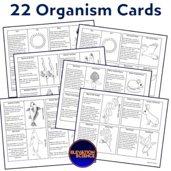 Bundle:  Food Web Cards - Forest and Ocean Ecosystem Activities (New!)