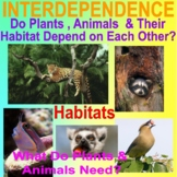 INTERDEPENDENCE BUNDLE - Plants and Animals Need Each Other