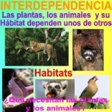 INTERDEPENDENCE BUNDLE - Plants and Animals Need Each Other- Spanish