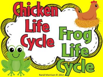 Life Cycle of Chicken and Frog Bundle