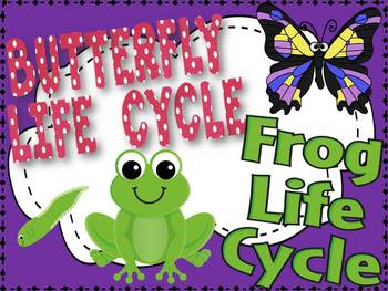Life Cycle of Frog and Butterfly Bundle
