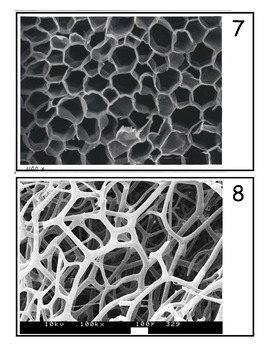 Bundle Scanning Electron Microscope Image Guessing Games
