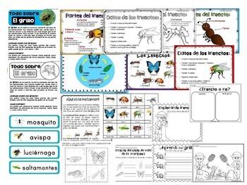 Bundle Unidad de estudio: Los insectos y Ruedas del ciclo de vida