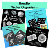 Bundle Water Organisms Posters, Booklet, Flash Cards, Note