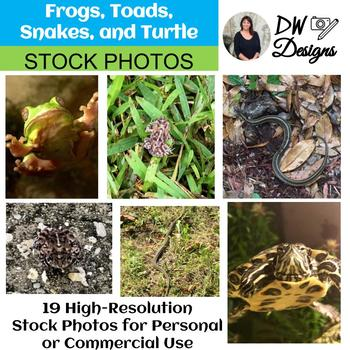 Bundle of 10 Stock Photos - Frogs, Toads, Snakes and Turtles - Group of 10