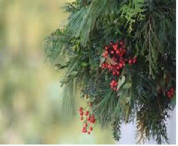 Bundle of 2 - Celebrating Christmas - Holiday Greenery & Christmas Trees