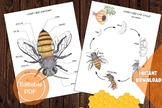 Bundle of 7 Insects set, Anatomy & Life cycle, Butterfly,