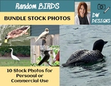 Bundle of Bird Stock Photos - Bird Picture Pack - Group of 10