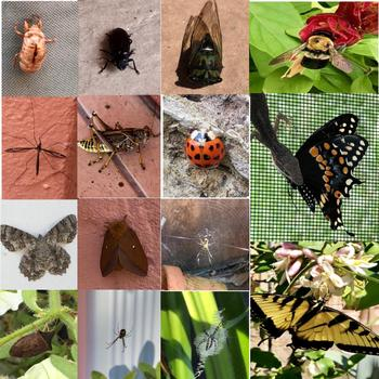 Bundle of Bugs Stock Photos - Bugs Picture Pack - Group of 15