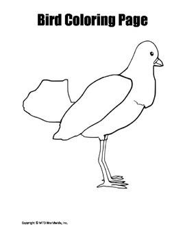 Bundle of Coloring Worksheets for Birds