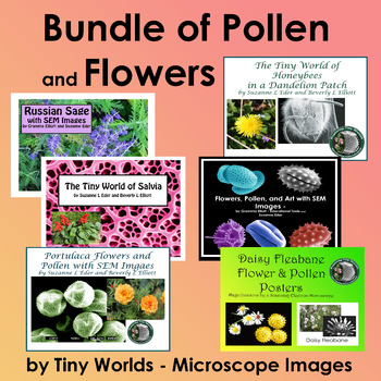 Bundle of SEM Images and Photographs of Flowers, Pollen, and Flower Parts