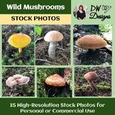 Bundle of Wild Mushroom Stock Photos - Wild  Mushroom Pict