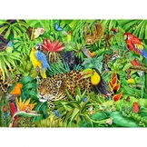 Bundle of resources based on the Amazon rainforest / Conse