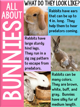 Bunnies ~ An Informational Unit About Rabbits