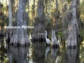 Burmese Python - Power Point - Information Facts Pictures History