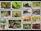 Burrowing Animals Photo Poster Display Pack