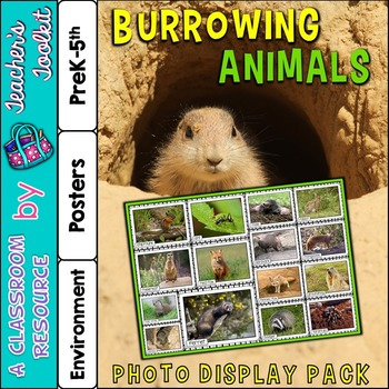 Burrowing Animals Photo Poster Display Pack {UK Teaching Resource}