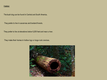 Bush Dog - Power Point Facts Information Pictures