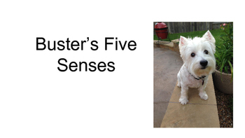 Buster's Five Senses