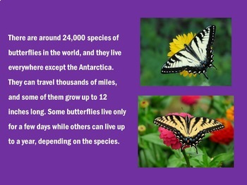 Butterfly Life Cycle PowerPoint | Butterfly Life Cycle Activities