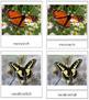 Butterflies: 3-Part Cards