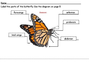 Butterflies! Analyzing Nonfiction Text Features