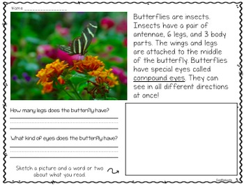 Butterflies a Close Read and Research