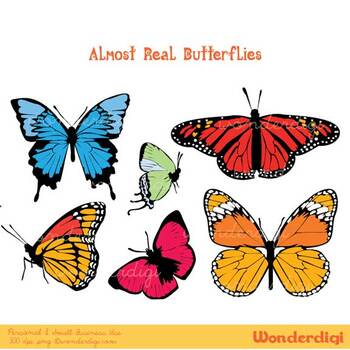 Butterflies Clip Art - Realistic Butterfly Illustrations - Digital Clipart-