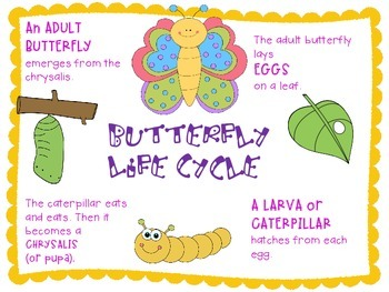 Butterflies: Life Cycle & More Integrated Science, Writing & Reading