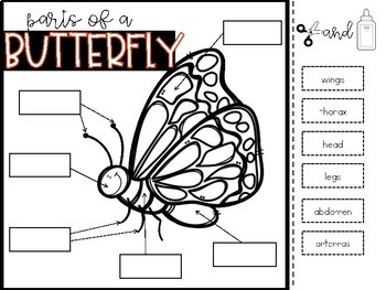 Butterflies {Life Cycle, Parts of a Butterfly and Butterfly Migration}