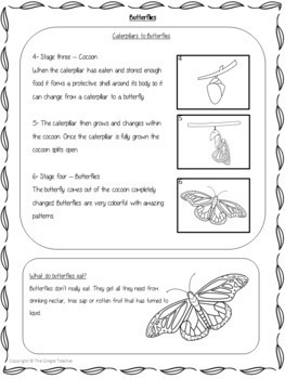 Butterflies Life Cycles -  Complete Science Lesson