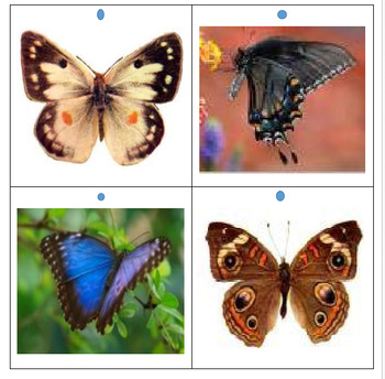 Butterflies & Moths Flash Cards