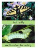 Butterflies & Moths Math, Science and Literacy Activities