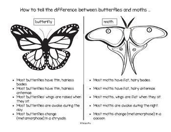 Butterflies & Moths Math, Science and Literacy Activities for Preschool & Pre-K