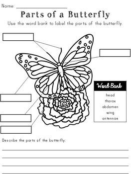 Butterflies Activity Pack
