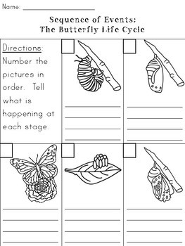 Caterpillar & Butterfly Life Cycle