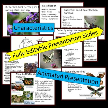 Butterflies - PowerPoint Presentation and Printables Bonus