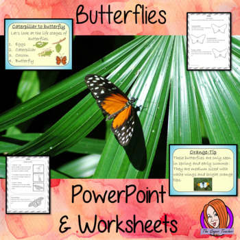 Butterflies   -  PowerPoint and Worksheets