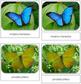 Butterflies Safari Toob Cards - Montessori