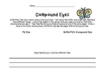 Butterflies:  Seeing Through Their Compound Eyes