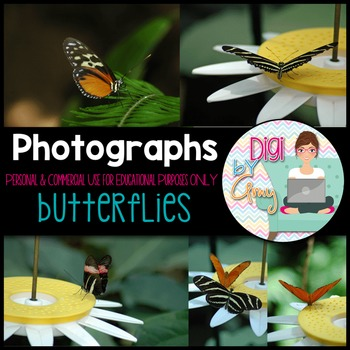 Butterflies Stock Photos - Photographs FREEBIE