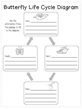 Text Feature Practice - Butterfly Reading Passage and Diagram