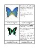 Butterflies - Three/Four Part Cards