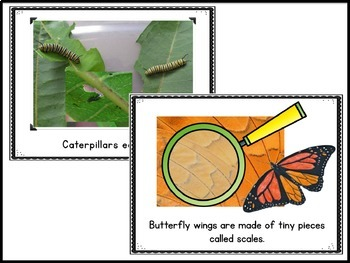 Butterflies and Caterpillars Lets Make a Field Guide Book Science Packet