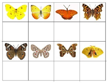 Butterflies and Moths:   Mini Matching Cards