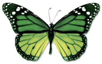 Butterflies and Moths - Text and Exercise Sheets