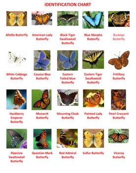 Butterflies and Moths Word Search Puzzles