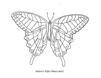 Free Painted Lady Butterfly Coloring Page, Download Free Clip Art ... | 270x350