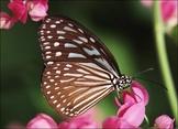 Butterflies versus Moths Jeopardy Game