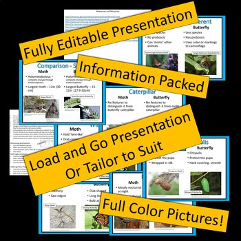 Butterflies vs Moths - a Comparison - PowerPoint Presentation Freebie